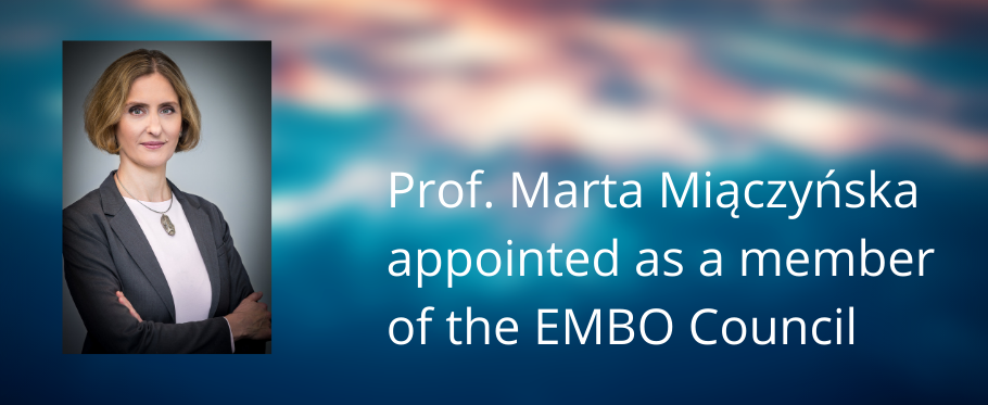 photo of Marta Miaczynska and text: Miaczynska appointed as a member of the EMBO Council
